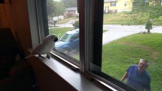 Papagáj takto víta svojho pána každý deň