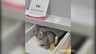 Cukor a múka s príchuťou mačky (Rusko)