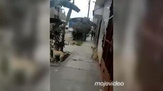 Tú mačku dáme dole!