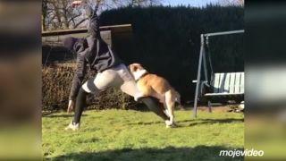 Chcel cvičiť jogu so svojím psom ako to videl vo videu