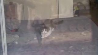 Mačku dobehli spomienky z vojny vo Vietname