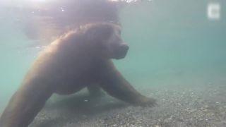 Medveď striehne na ryby aj pod vodou (Aljaška)