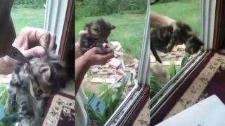 nové mačička videá teror na orgie hrad