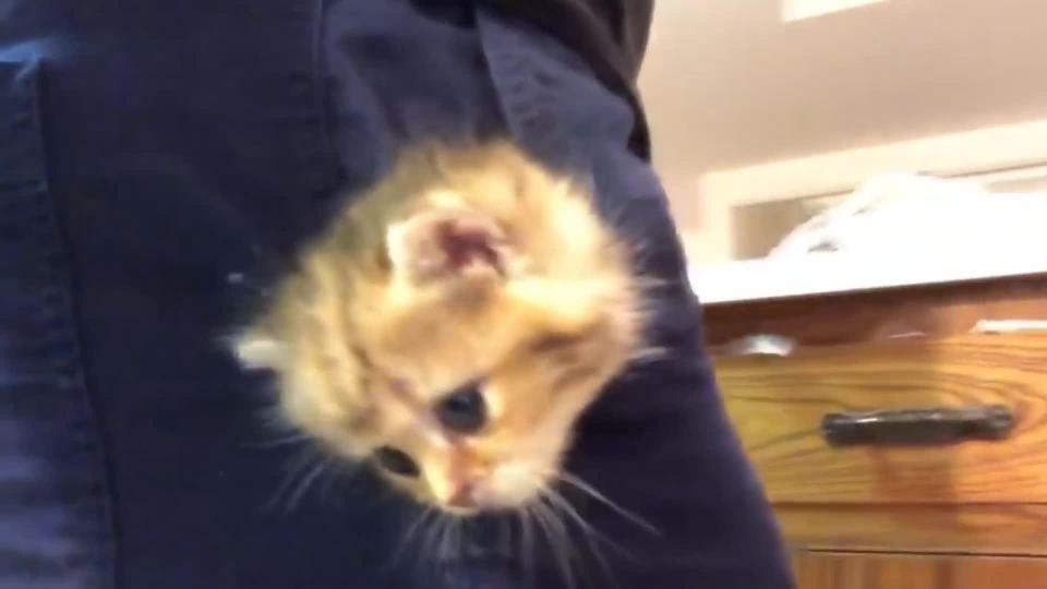 Mokré mačička pics